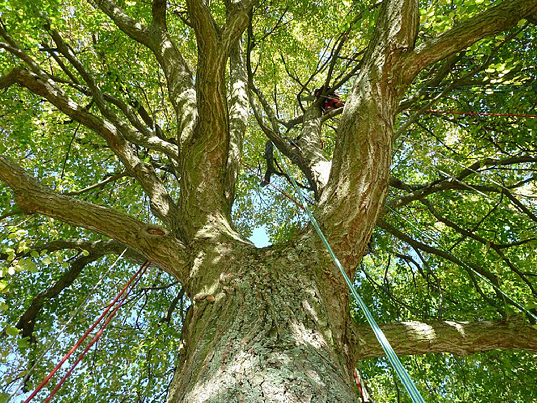 Baumpflege Nürnberg 09