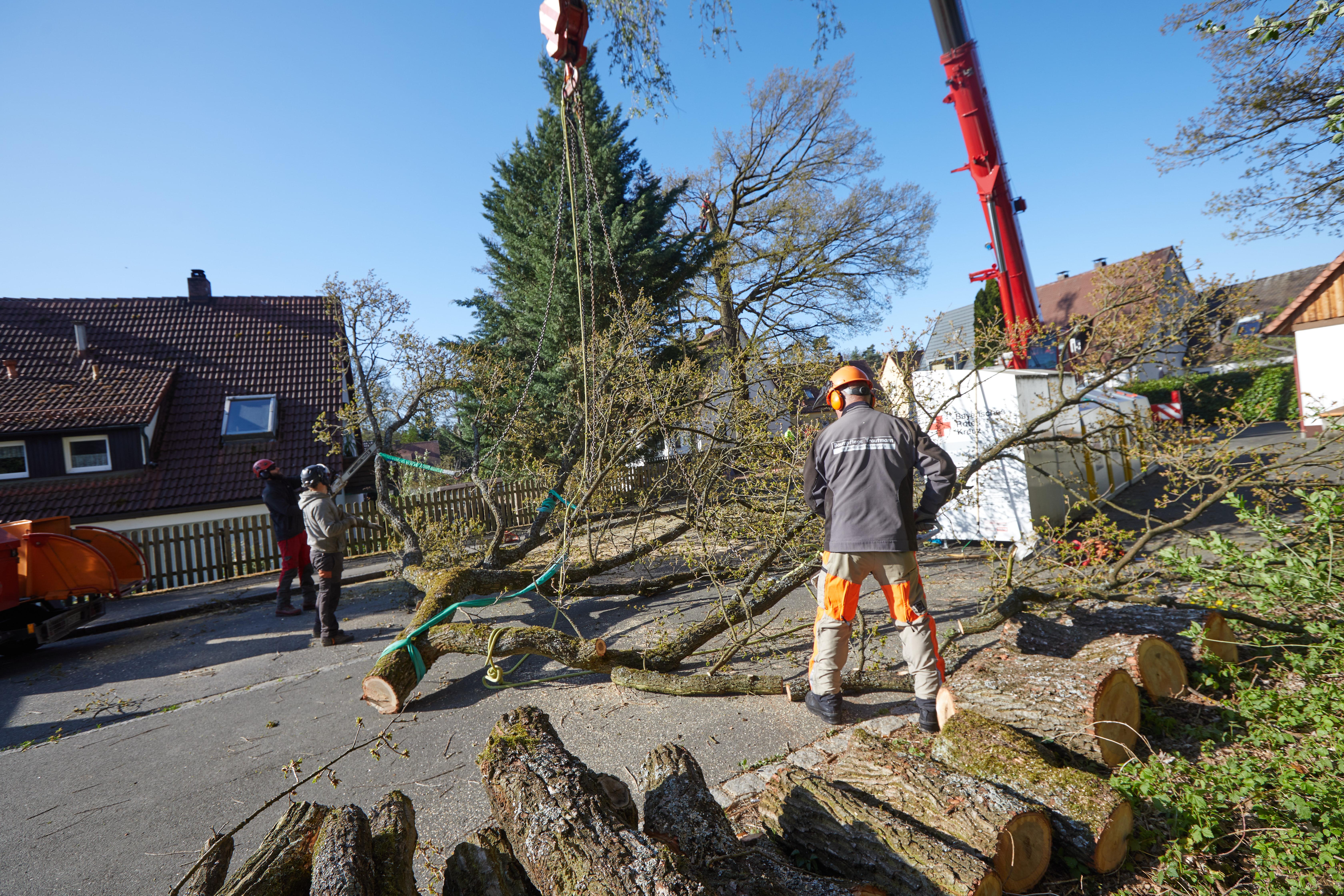Baumpflege Nürnberg 2020