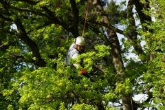 Baumpflege Nürnberg 03