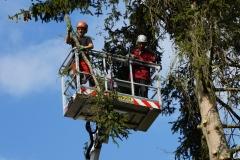 Baumpflege Nürnberg 07