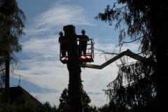 Baumpflege Nürnberg 08