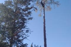 Baumpflege Nürnberg 11