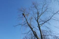 Baumpflege Nürnberg 01