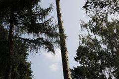 Baumpflege Nürnberg 04