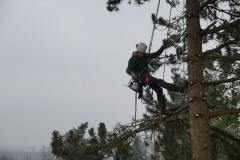 Baumpflege Nürnberg 13