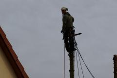 Baumpflege Nürnberg 15