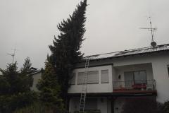 Baumpflege Nürnberg 16