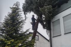 Baumpflege Nürnberg 17