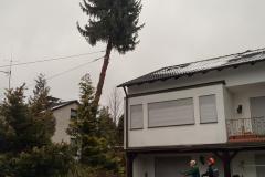 Baumpflege Nürnberg 18