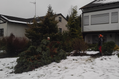 Baumpflege Nürnberg 19
