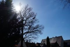 Baumpflege Nürnberg 14