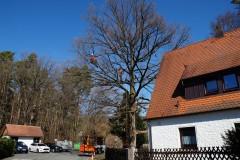 Baumpflege Nürnberg 02