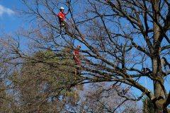 Baumpflege Nürnberg 12