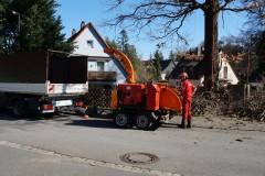 Baumpflege Nürnberg 06