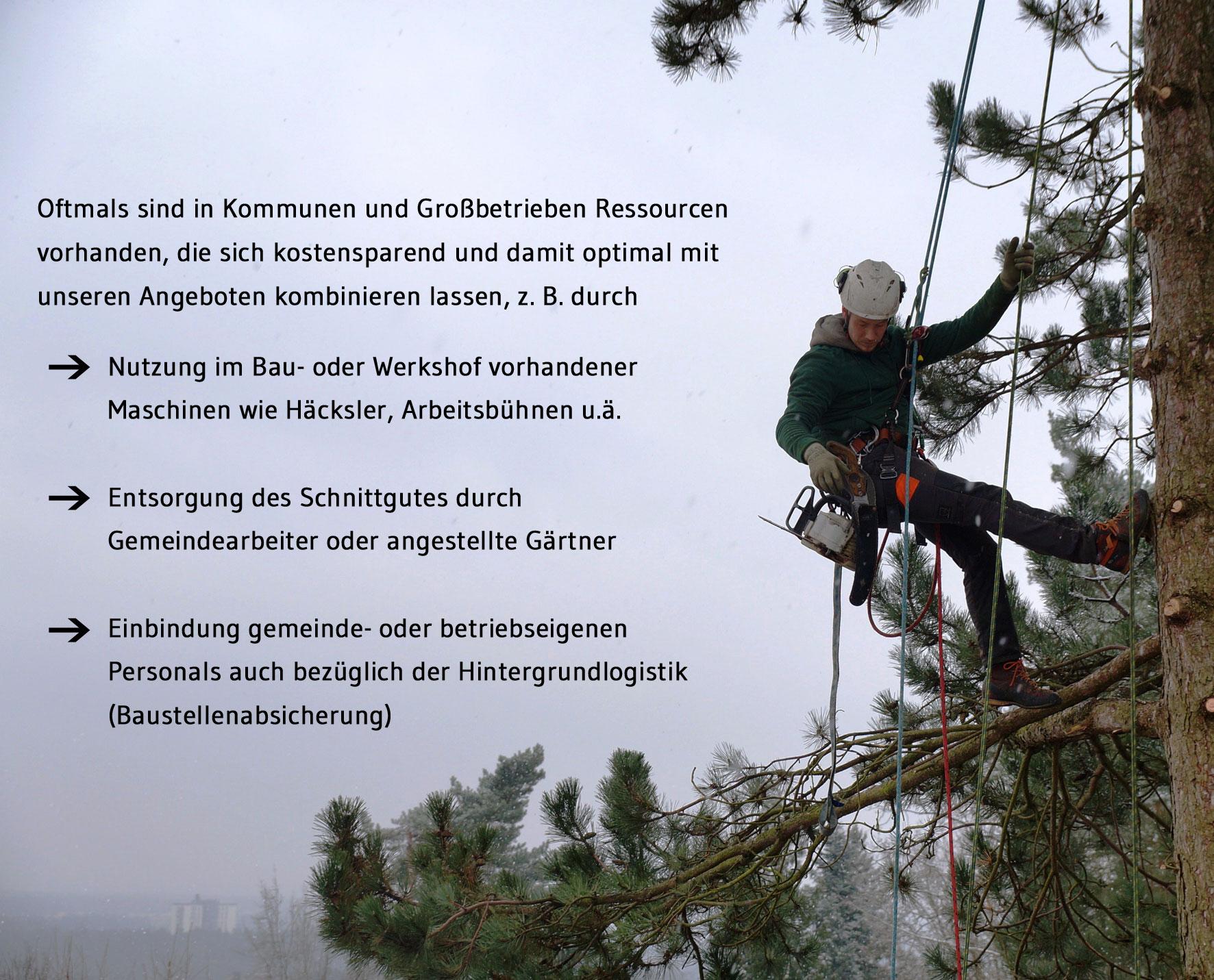 Baumpflege an oeffentlichen Baumbestaenden